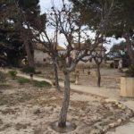 Jinjolero seco en abril