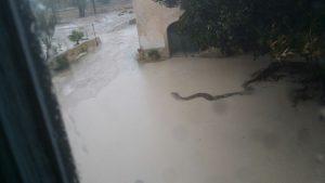 innundaciones-torre-juana-enero-2017-6