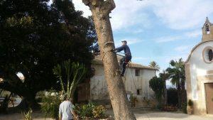 procesionaria-pino-torre-juana-4
