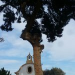 procesionaria-pino-torre-juana-5