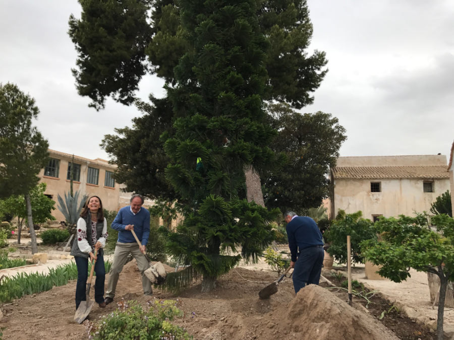 Plantación Araucaria en Torre Juana